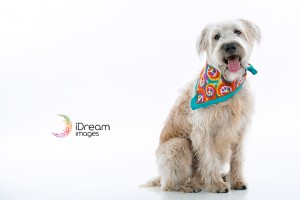 Chillicothe Ohio Pet Photographer